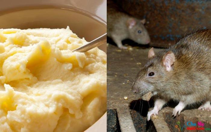 Cách diệt chuột bằng khoai tây nghiền