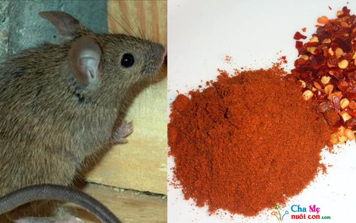 đuổi chuột vĩnh viễn bằng ớt bột