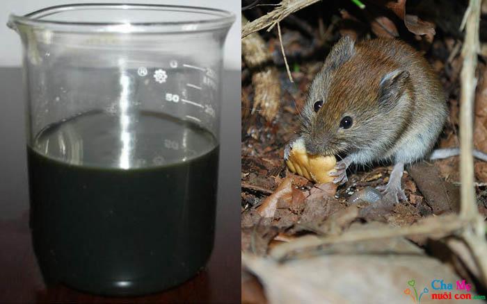 Diệt chuột bằng dầu mazut
