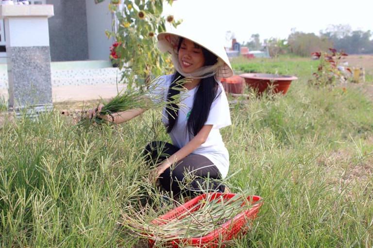 Nhiều công dụng chữa trị bệnh dân gian của cỏ mần trầu